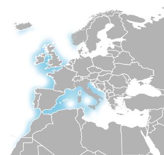 Habita zonas costeiras, em substratos arenosos e rochosos fazendo o seu ninho em conchas de bivalves. Podem ser encontrados em ambientes marinhos com temperaturas entre 5 e 22ºC. ILUSTRAÇÃO adaptação do mapa de John Harvey por Manuel Vieira e Joana Vicente
